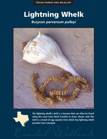 Lightning Whelk - The State of Water