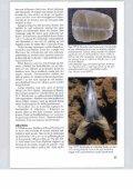 NGI 117 - Naturstyrelsen - Page 5