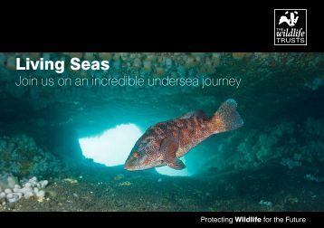 Living Seas Vision (A5 booklet 2010).pdf - Gwent Wildlife Trust