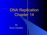 DNA Replication Chapter 14