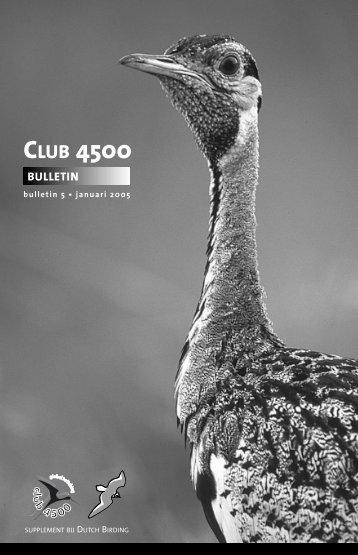 2004 - Dutch Birding