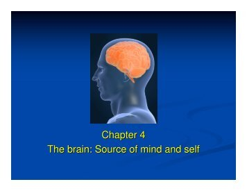 Chapter 4 The brain: Source of mind and self - haspi