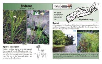 Redroot - Species at Risk