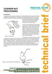 Cashew Nut Processing - Modern Prepper