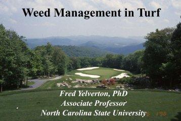 Tall Fescue - TurfFiles - North Carolina State University