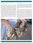 cooperostra - Equator Initiative - Page 6