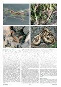 Objevení populace užovky podplamaté v ... - Daniel Jablonski - Page 3
