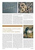 Objevení populace užovky podplamaté v ... - Daniel Jablonski - Page 4