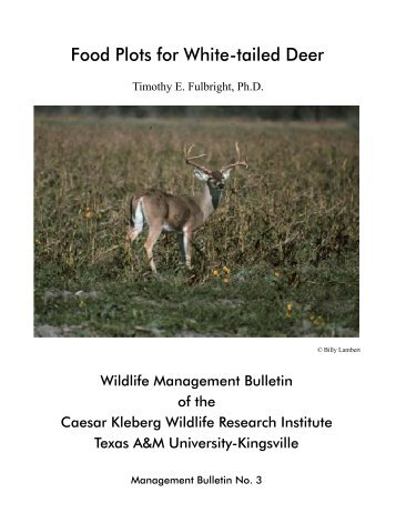 Food Plots for White-tailed Deer - Texas A&M AgriLife Extension ...