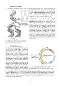 """""""Sperimenta il BioLab"""" - CusMiBio - Università degli Studi di Milano - Page 5"""