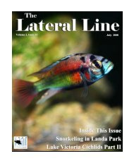 Lateral Line July 2008.pub - Hill Country Cichlid Club