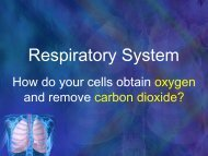Med Chem Gas Laws and Respiration.pdf - haspi