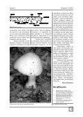 PDF (3.7 Mt) - Seepia - Page 5