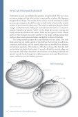 Freshwater Mussels Pacific Northwest - South Coast Conservation ... - Page 4