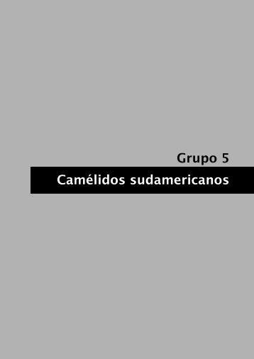Camélidos suramericanos - ALPA: Asociación Latinoamericana de ...