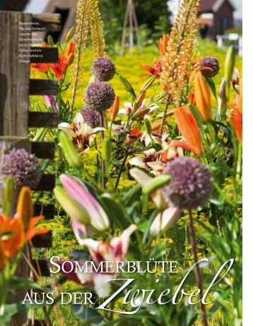 Sommerblüte aus der Zwiebel (Lilie, Dahlie & Co.) - textaturen ((.)) de