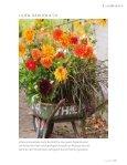 Sommerblüte aus der Zwiebel (Lilie, Dahlie & Co.) - textaturen ((.)) de - Seite 2