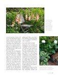 Sommerblüte aus der Zwiebel (Lilie, Dahlie & Co.) - textaturen ((.)) de - Seite 6
