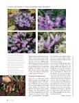 Sommerblüte aus der Zwiebel (Lilie, Dahlie & Co.) - textaturen ((.)) de - Seite 7