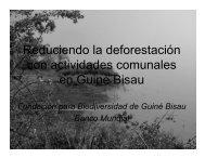 Descripción del proyecto en Guiné Bissau - the Katoomba Group