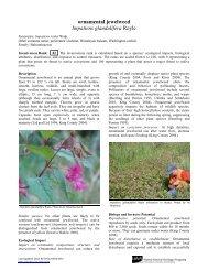 ornamental jewelweed Impatiens glandulifera Royle