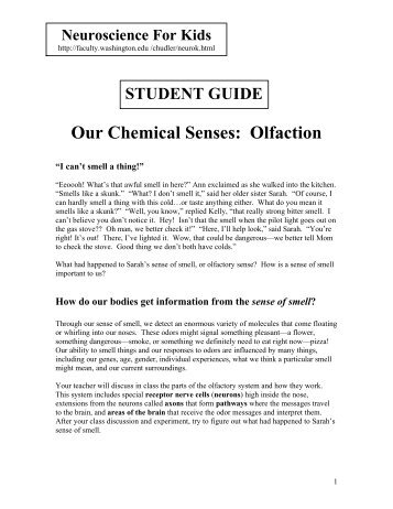 Our Chemical Senses: Olfaction