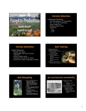 Lantern Production & Variety Trial Results - Vegetable Production