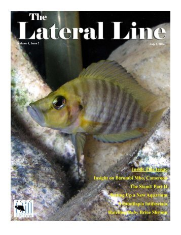 Lateral Line July 2004-1.pub - Hill Country Cichlid Club