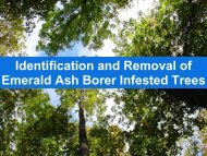 Identification and Removal of Emerald Ash Borer Infested Trees