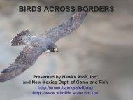 BIRDS ACROSS BORDERS - New Mexico Avian Protection