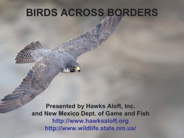 BIRDS ACROSS BORDERS - New Mexico Avian Protection