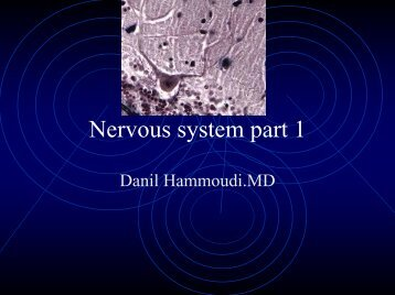 Nervous system part 1 - Sinoe medical homepage.