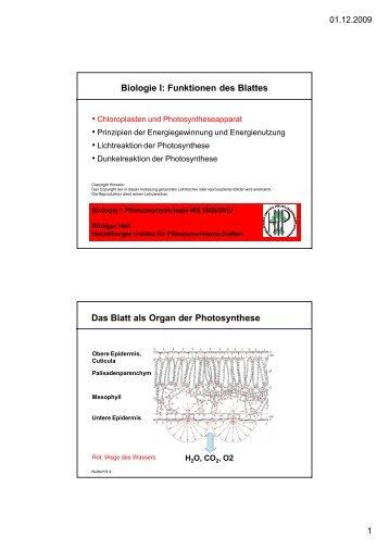 download pdf Biologie I: Funktionen des Blattes - ZMBH