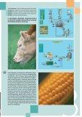 irányítás- technika biogáz üzemekhez - Contireg Mérnökiroda Kft. - Page 3