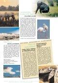 provence buissonni're - Un coin Tranquille en Provence L ... - Page 7