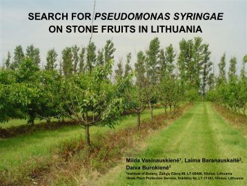 search for pseudomonas syringae on stone fruits in ... - Cost 873