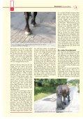 Pferdeland RLP Ausgabe August 2013 - PDF Download - Seite 6