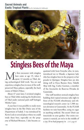 Stingless Bees of the Maya - Maya Archaeology