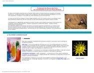 Conseils - Allergies et Homéopathie