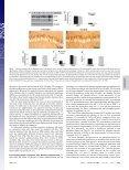 Alzheimer's disease Chronic nicotine administration exacerbates tau ... - Page 5