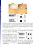 Alzheimer's disease Chronic nicotine administration exacerbates tau ... - Page 6