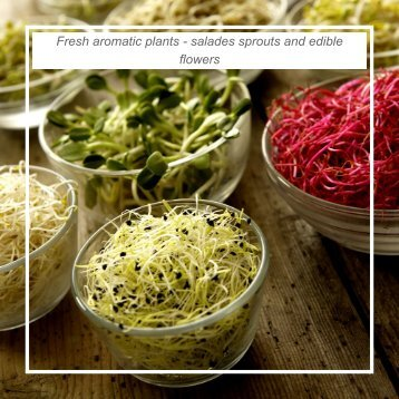 Fresh aromatic plants - salades sprouts and edible flowers