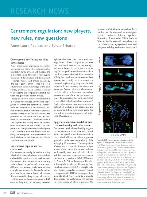 Download Publication - CellNetworks
