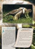 Ameisenbär - Tierparkfreunde Hellabrunn eV - Seite 2