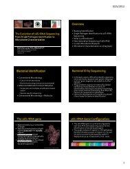Bacterial Identification Single Pathogen Identification by 16S rRNA ...
