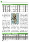 Erfolgreicher Anbau und Verwertung von Ackerbohnen - Seite 3
