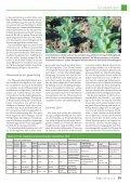 Erfolgreicher Anbau und Verwertung von Ackerbohnen - Seite 4