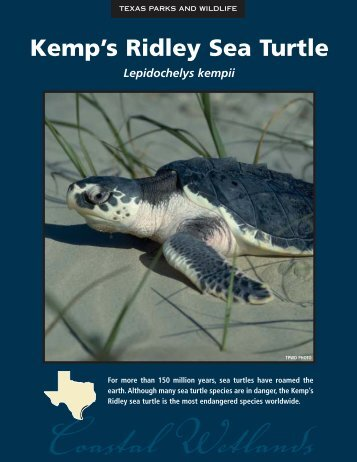 Kemp's Ridley Sea Turtle - The State of Water