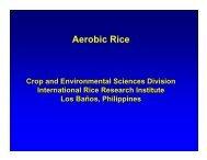 Aerobic Rice - Rice Knowledge Bank - International Rice Research ...