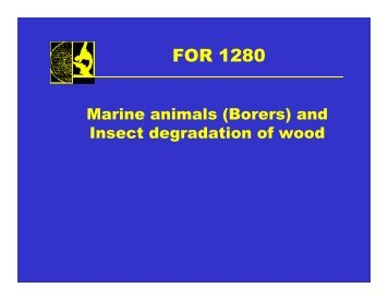 And Insect Degradation Of Wood